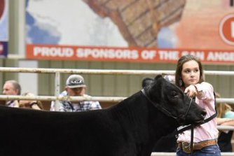 Angus shown in San Angelo