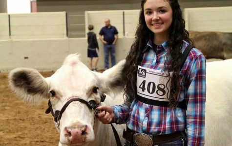 King's livestock places at show