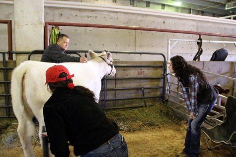 Carnes rebuilds the FFA organization