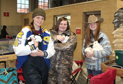 FFA wins at Rabbit show